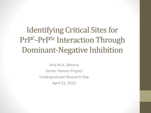 Dominant Negative Inhibition in Prion Protein