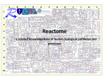 Reactome - a curated knowledgebase of human biological