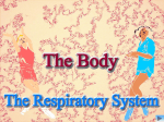 10 Respiratory System SB Powerpoint