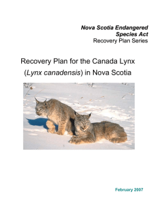 Recovery Plan for the Canada Lynx