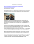 a printout on Canine Influenza