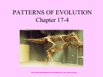 17.4 Patterns of Macroevolution