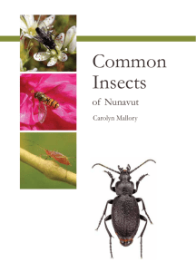 Common Insects - The Nunavut Bilingual Education Society