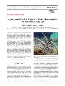 Invasive red lionfish Pterois volitans blow directed jets of water at