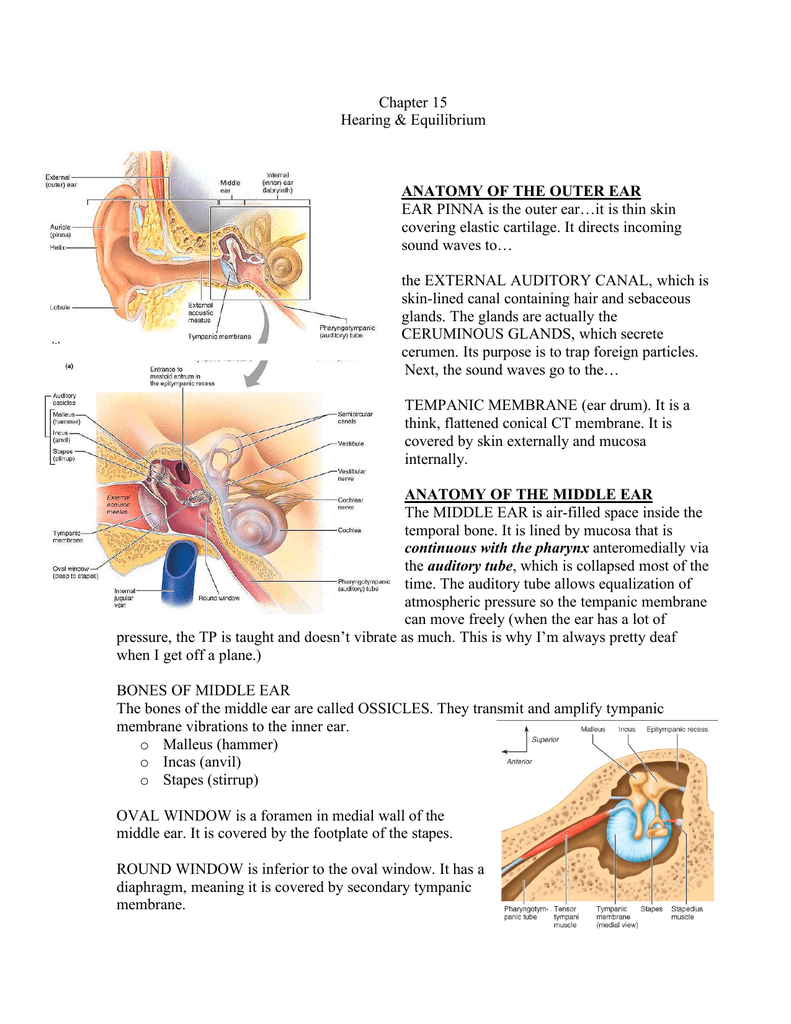 Anatomy Of The Outer Ear Ear Pinna Is The Outer