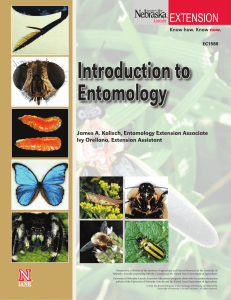 Introduction to Entomology - UNL, Go URL