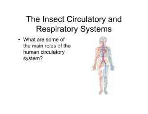 The Insect Circulatory and Respiratory Systems