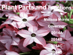 Plant parts and functions ppt