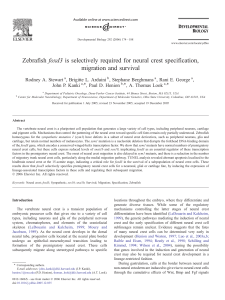 Zebrafish foxd3 is selectively required for neural crest specification