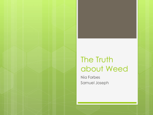 The Truth about Weed - Copley