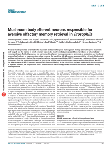 Mushroom body efferent neurons responsible for aversive olfactory