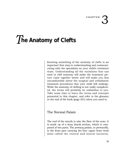Anatomy of Clefts