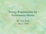 Energy Requirements for Performance Horses