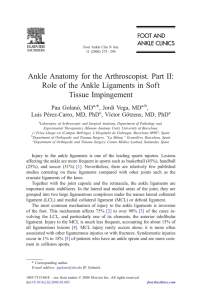 Ankle Anatomy for the Arthroscopist. Part II: Role of the Ankle