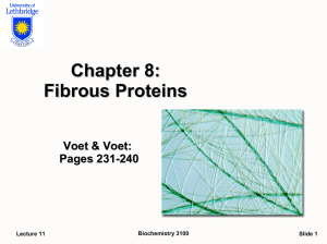 Chapter 8: Fibrous Proteins