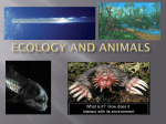 Ecology and Adaptations - Madison County Schools