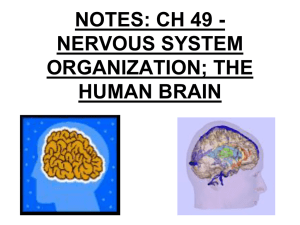 Nervous System - wlhs.wlwv.k12.or.us