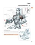 Shoulder summary
