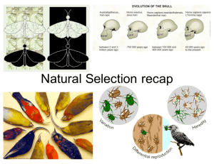 Natural Selection Intro