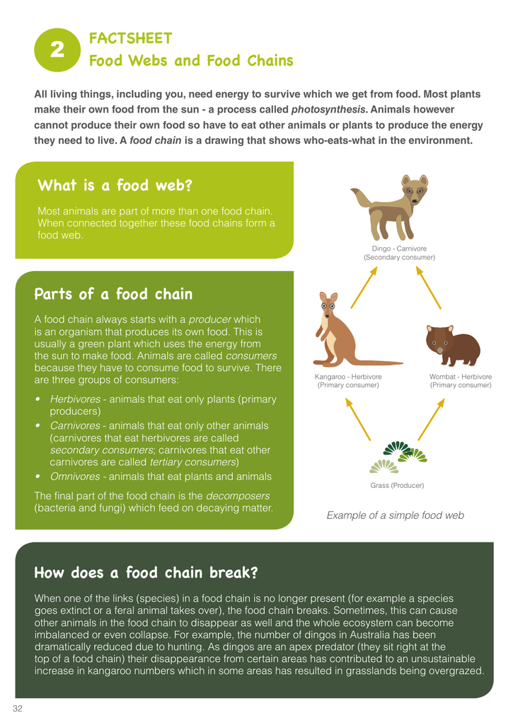 Factsheet Food Webs And Food Chains