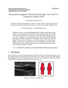 Numerical Investigation of Blood Flow through a Vein with Two