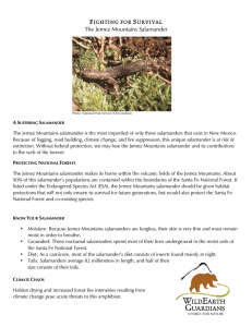 The Jemez Mountains Salamander