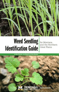 Weed Seedling Identification Guide