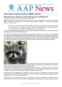 Raccoons are a menace to more than just your garbage can