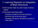 1. Learning Depends on Integration of Brain Structures