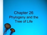 Phylogeny - Perry Local Schools