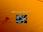 Nervous System - Central Dauphin School District