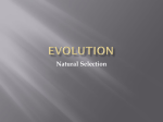 evolution - HollyMartin