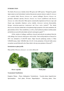 INTRODUCTION The family Brassicaceae includes about 400