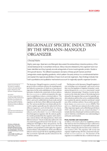 regionally specific induction by the spemann