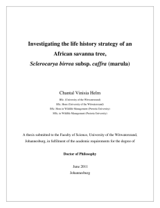 Investigating the life history strategy of an African savanna tree