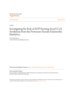 Investigating the Role of ADP-forming Acetyl-CoA