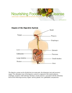 The digestive system can be divided into two main parts: the