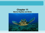 Chapter 11 - marine reptiles and birds