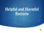 Helpful and Harmful Bacteria