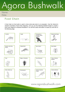 Create a food chain featuring local wildlife