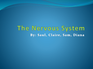 The Nervous System - human-body