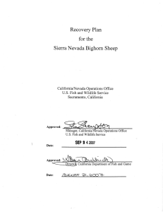 Recovery Plan for the Sierra Nevada Bighorn