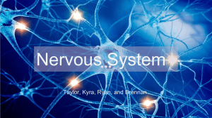 Nervous System Period 7 - Mercer Island School District