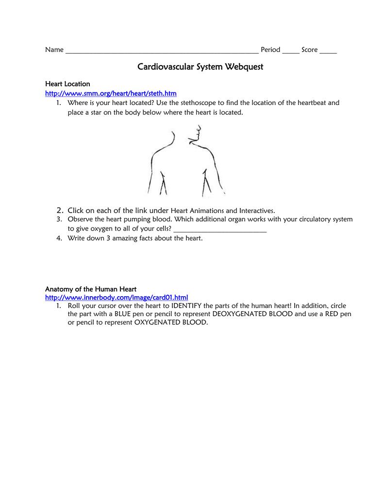 Cardiovascular System Webquest