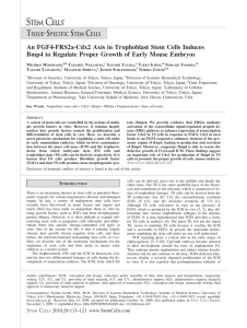 An FGF4-FRS2[alpha]-Cdx2 Axis in Trophoblast Stem Cells Induces