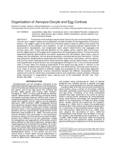 Organisation of Xenopus oocyte and egg cortices
