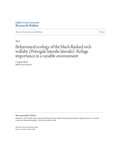 Behavioural ecology of the black-flanked rock