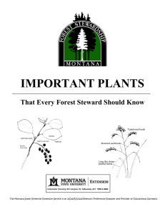important plants - Montana State University Extension
