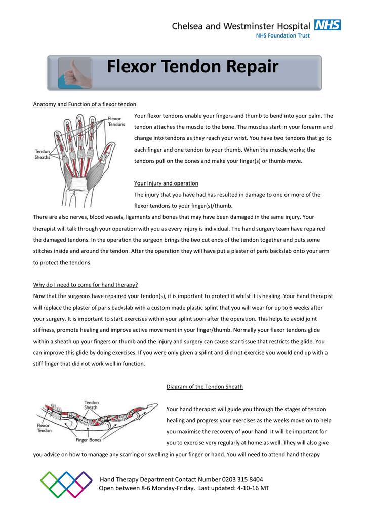 Flexor Tendon Information Sheet