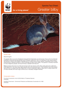 Greater bilby - WWF